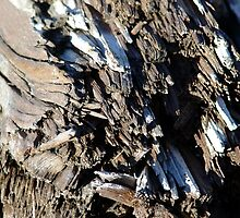 Patterns in Driftwood (5) by Jann Ashworth