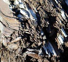 Patterns in Driftwood (5) by Jann Ashworth