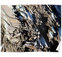 Patterns in Driftwood (5) Poster