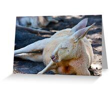 Kangaroo, Whiteman Park Greeting Card