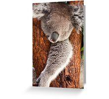 Koala Whiteman Park Greeting Card