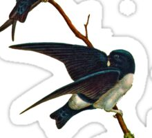 Nepal House Martin Sticker
