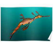 Tassie Dragon Poster