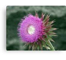 Unknown Flower Canvas Print