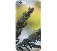 Medicinal Plant Offering iPhone Case/Skin
