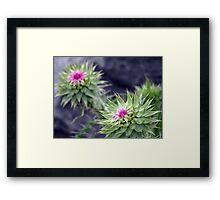 Unknown Flower 2 Framed Print