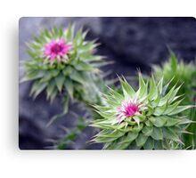Unknown Flower 2 Canvas Print
