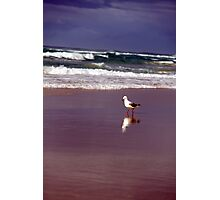 one or two birds? Photographic Print