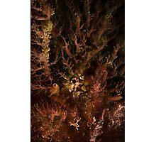 Tasselled Anglerfish Portrait Photographic Print