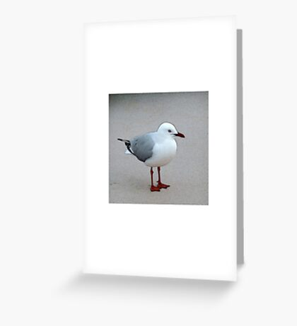 Silver Gull Greeting Card