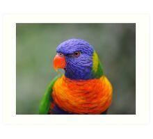 Bright Eyes - rainbow lorikeet Art Print
