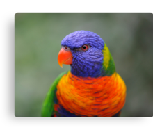Bright Eyes - rainbow lorikeet Canvas Print