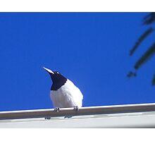 Butcher Bird in the Autumn Light Photographic Print