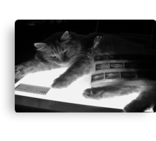 The Lightbox, the Cat and the Negatives II Canvas Print