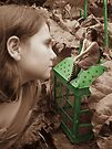 The Green Lantern by Susie Hawkins