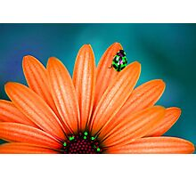 Bright Bug Green Photographic Print