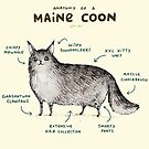 Anatomy of a Maine Coon by Sophie Corrigan