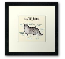 Anatomy of a Maine Coon Framed Print