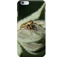 Incy Wincy  iPhone Case/Skin
