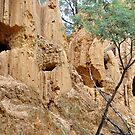 Tambaroora Golden Gully NSW Australia by Bev Woodman