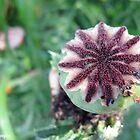 Poppy by Mascarah