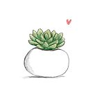 Succulent in Plump White Planter by Sophie Corrigan