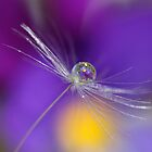 Dandelion droplet by Melinda Gaal