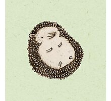 Plump Hedgehog Photographic Print
