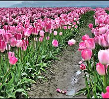 Fields of Pink by Kathy Yates