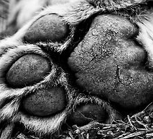 A Lion's Paw - Wildlife Heritage Foundation by Nick Tsiatinis