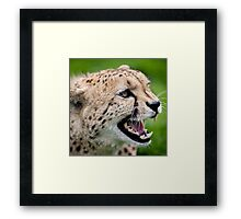 Snarling Cheetah - Wildlife Heritage Foundation Framed Print