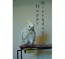 Birthday Bird Photographic Print