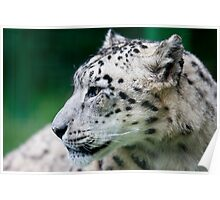 Snow Leopard - Wildlife Heritage Foundation Poster