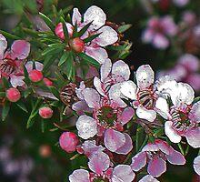 Pretty in pink by goanna
