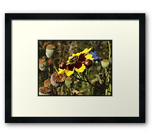 Colored Pencil Poppies Framed Print