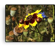 Colored Pencil Poppies Canvas Print