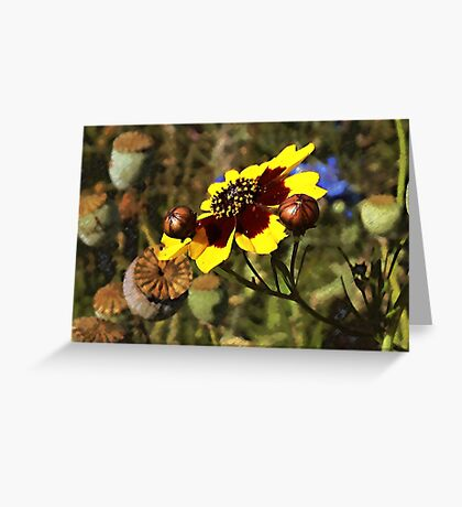 Colored Pencil Poppies Greeting Card