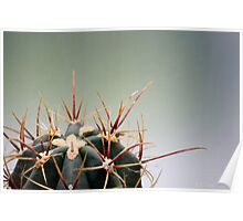Spike the Cactus Poster