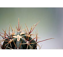 Spike the Cactus Photographic Print