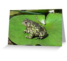 Frog Sitting on a Water Lily Greeting Card