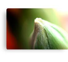 flower (pupoljak) macro grean Canvas Print