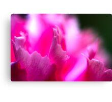 flowers pink macro  Canvas Print
