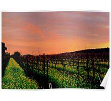Vineyard 4, Alexander Valley, California Poster