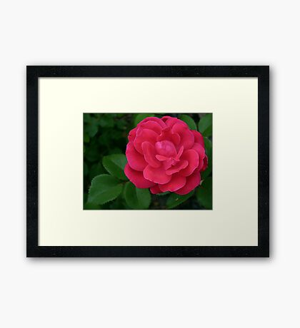"""""""She's An  Absolute Knockout In Red"""" Framed Print"""