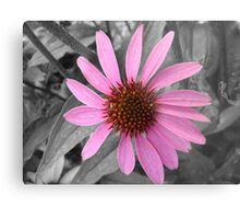 Pink Dog Daisy Wildflower Metal Print