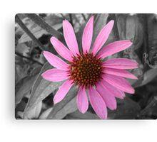 Pink Dog Daisy Wildflower Canvas Print