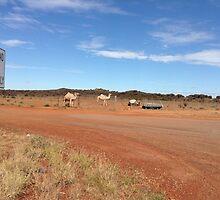 Camels near Leonora WA by gillsart