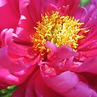 Pink and Yellow by mackography