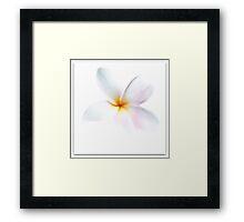 ~ Plumeria ~ Framed Print