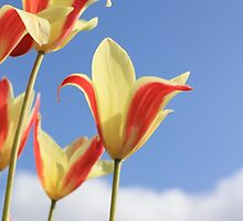 Tulips in the sky by Neil MacGregor